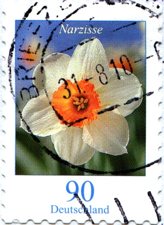 GERMANY - CIRCA 2010: A stamp printed in Germany shows narcissus, circa 2010 Stock Photo - 9066188