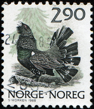 NORWAY - CIRCA 1988: A stamp printed in Norway shows Western Capercaillie - Tetrao urogallus, circa 1988 Stock Photo - 9180294