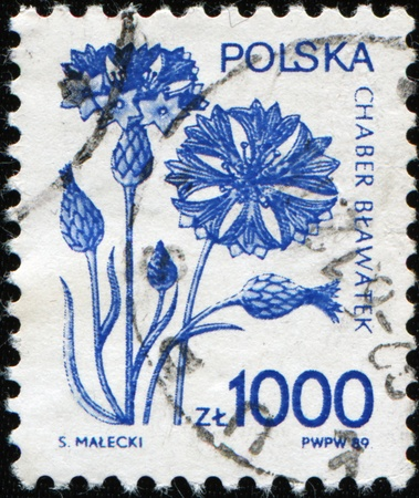 POLAND - CIRCA 1989: A stamp printed in Poland sows Centaurea cyanus (Cornflower, Bachelor's button, Bluebottle, Boutonniere flower, Hurtsickle, Cyani flower), circa 1989 Stock Photo - 9380654