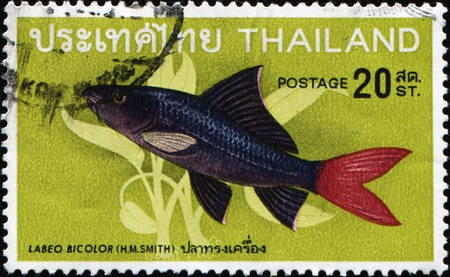 THAILAND - CIRCA 1986: A stamp printed in Thailland shows Red-tailed black shark, Redtail Shark ore Labeo bicolor - Epalzeorhynchos bicolor, circa 1986 photo