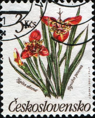 czechoslovakia: CZECHOSLOVAKIA  - CIRCA 1990: A post stamp printed in Czechoslovakia shows Tigridia pavonia flower, circa 1990