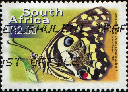 SOUTH AFRICA - CIRCA 2000: A stamp printed in South Africa shows butterfly Citrus swallowtail - Pappilio Demodocus Esper, circa 2000 photo