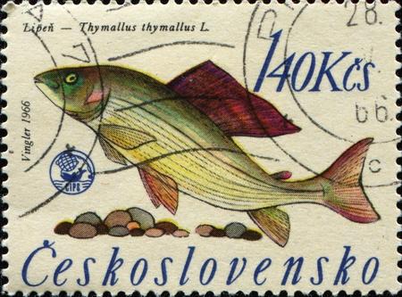 grayling: Checoslovaquia - alrededor de 1966: Un puesto de sello impreso en espect�culos de Checoslovaquia Grayling - Thymallus thymallus l., alrededor de 1966 Foto de archivo