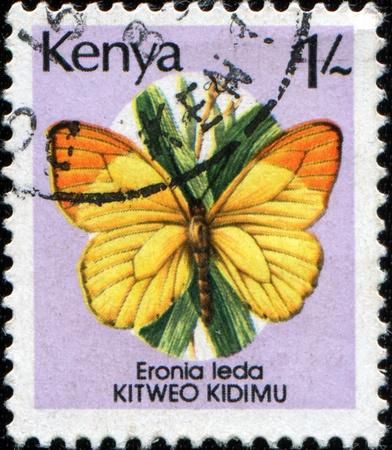 vagrant: KENYA - CIRCA 1988: A stamp printed in Kenya shows the butterfly Autumn Leaf Vagrant or Orange and Lemon (Eronia leda), circa 1988  Stock Photo