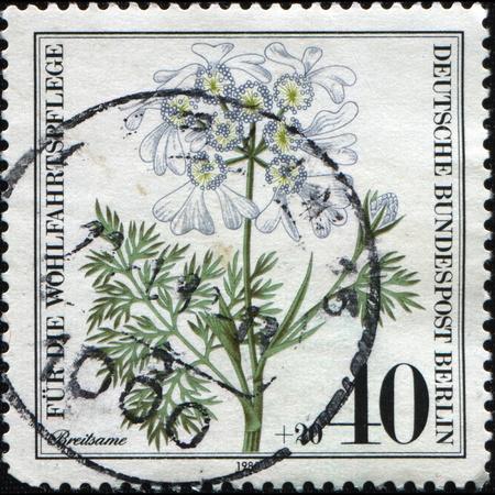 minoan: WEST BERLIN - CIRCA 1980: A stamp printed in West Berlin shows Minoan Lace, White Lace Flower (Orlaya grandiflora), circa 1980
