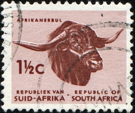 suid: SOUTH AFRICA - CIRCA 1961: A stamp printed in South Africa shows Afrikander bull, series, circa 1961