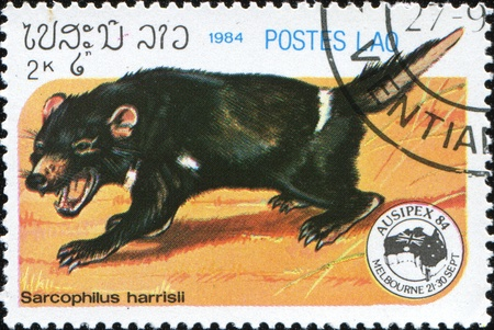 taz: LAOS - CIRCA 1984: A stamp printed in Laos shows Tasmanian devil - Sarcophilus harrisii, circa 1984 Stock Photo