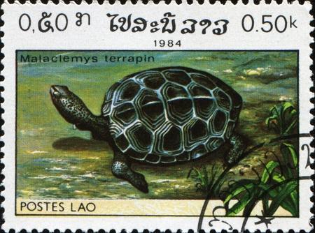 terrapin: LAOS - intorno al 1985: Un timbro stampato in spettacoli di Laos Diamondback terrapin - Malaclemys terrapin, intorno al 1985