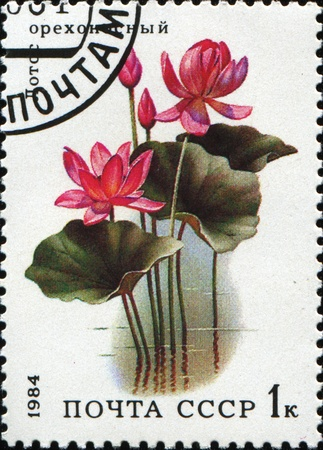 indian postal stamp: USSR - CIRCA 1984: A stamp printed in the USSR shows Indian Lotus, Sacred Lotus, Bean of India - Nelumbo nucifera, circa 1984 Stock Photo