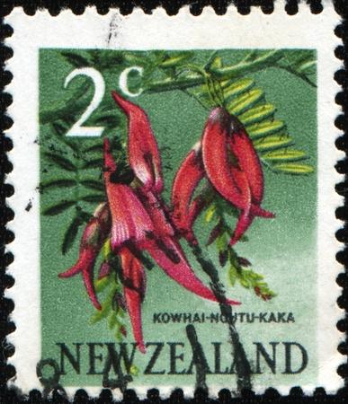 NEW ZEALAND - CIRCA 1967: A stamp printed in New Zealand shows Kowhai Ngutu-kaka or Kaka Beak - Clianthus puniceus, circa 1967  photo