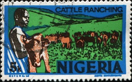 ranching: NIGERIA - CIRCA 1973: A stamp printed in Nigeria shows cattle ranching, circa 1973  Stock Photo