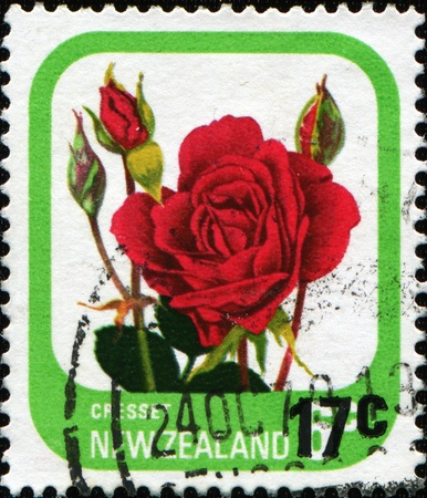 NEW ZEALAND - CIRCA 1975: A stamp printed in New Zealand shows rose Cresset, series, circa 1975  photo