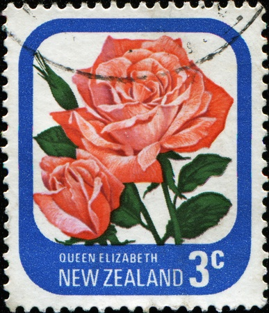 NEW ZEALAND - CIRCA 1975: A stamp printed in New Zealand shows rose Queen Elisabeth, series, circa 1975  photo