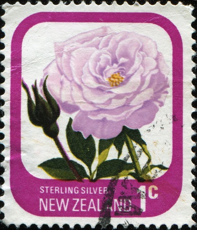 NEW ZEALAND - CIRCA 1975: A stamp printed in New Zealand shows rose  Sterling Silver, series, circa 1975