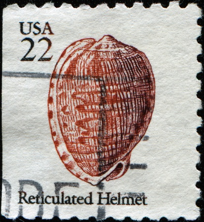 united states postal service: UNITED STATES OF AMERICA - CIRCA 1985: A stamp printed in the USA shows shell of Reticulated Helmet, circa 1985  Stock Photo
