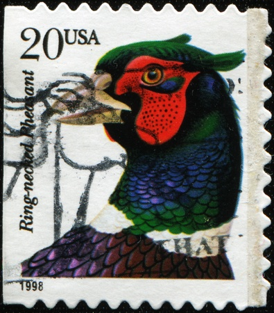 postmail: UNITED STATES OF AMERICA - CIRCA 1988: A stamp printed in the United States of America shows Ring-necked Pheasant - Phasianus colchicus, circa 1988