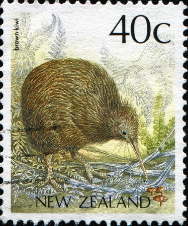 NEW ZEALAND - CIRCA 1988: A stamp printed in New Zealand shows Brown Kiwi - Apteryx australis, circa 1988  photo