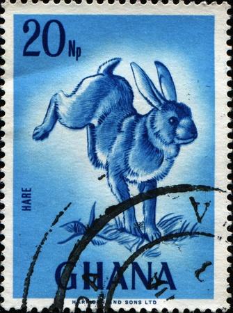 wilding: GHANA - CIRCA 1967: A stamp printed in Ghana shows hare, circa 1967