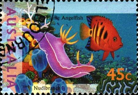 postmail: AUSTRALIA - CIRCA 1995: A stamp printed in Australia shows Flame Angelfish - Centropyge loricula and Nudibranch, circa 1995