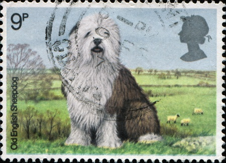 GREAT BRITAIN - CIRCA 1978: A stamp printed in the Great Britain shows Old English Sheepdog, British dogs, circa 1978  Stock Photo