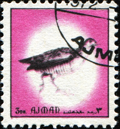 AJMAN - CIRCA 1971: A stamp printed in Ajman shows Common Pheasant - Phasianus colchicus, circa 1971 Stock Photo - 11370278