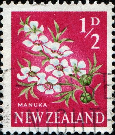 NEW ZEALAND - CIRCA 1923: A stamp printed in New Zealand shows Leptospermum scoparium (Manuka in Mauri), series, circa 1923  photo