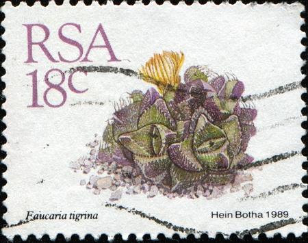 plants species: SUD AFRICA - CIRCA 1989: Un timbro stampato in Sud Africa (RSA) mostra Faucaria tigrina - specie di succulente piante subtropicali del Aizoaceae famiglia, circa 1989