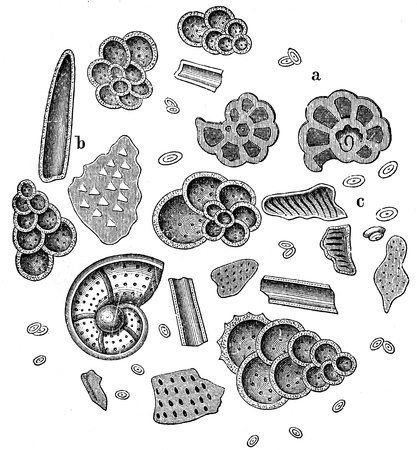 publishers: microscopic preparation of chalk - an illustration of the encyclopedia publishers Education, St  Petersburg, Russian Empire, 1896