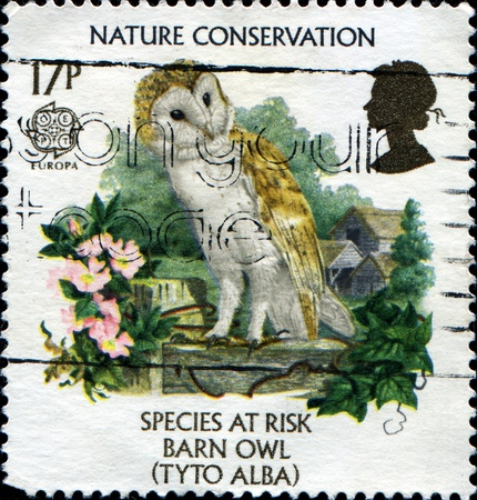 GREAT BRITAIN - CIRCA 1986: a stamp printed in the Great Britain shows Barn owl, endangered species, circa 1986