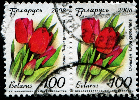 phytology: BELARUS - CIRCA 2008; A Stamp printed in Belarus shows Red tulip - Tulipa Gesneriana; circa 2008 Editorial