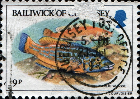 GUERNSEY - CIRCA 1985: A stamp printed in Guernsey shows fish Cuckoo Wrasse (Labrus mixtus), circa 1985 photo