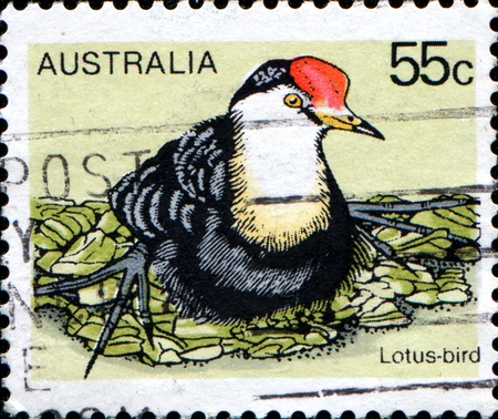 trotters: AUSTRALIA - CIRCA 1978: A stamp printed in Australia shows Lotus bird, Lily Trotters or Jesus Birds - Jacanas, circa 1978  Editorial