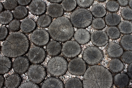 transverse: background from transverse sections of logs and small stones