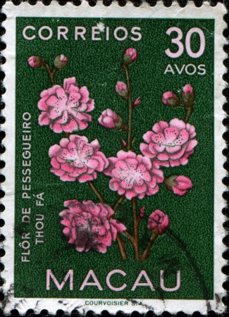 MACAO - CIRCA 1953: A stamp printed in Macao shows Chinese plum and Japanese apricot - Armeniaca (Prunus) mume, circa 1953  photo