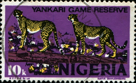 NIGERIA - CIRCA 1973  A stamp printed in Nigeria shows Two cheetahs on a tree in Yankari Game Reserve, series, circa 1973 photo