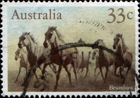 AUSTRALIA - CIRCA 1986: A stamp printed in australia shows Brumbies, circa 1986  photo