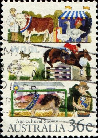 AUSTRALIA - CIRCA 1987: A stamp printed by Australia shows Agricultural shows, circa 1987  photo