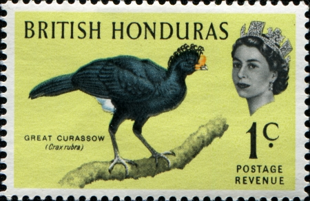 BRITISH HONDURAS - CIRCA 1962: A stamp printed in British Honduras shows Great Curassow - Crax rubra, circa 1962