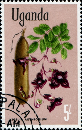 UGANDA - CIRCA 1969  A stamp printed in Uganda shows kigelia aethiopium, Flowers, circa 1969