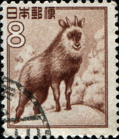 JAPAN - CIRCA 1952  A stamp printed in Japan shows Japanese serow  Capricornis crispus , circa 1952