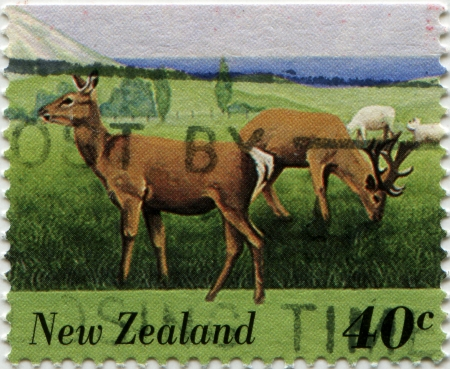 NEW ZEALAND - CIRCA 2005  A stamp printed in New Zealand shows  deer, circa 2005  photo