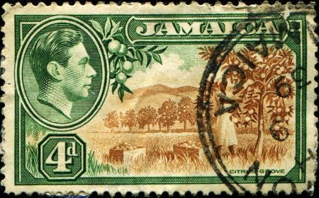 JAMAICA - CIRCA 1938  A stanp printed in Jamaica shows citrus grove, circa 1938