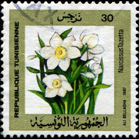 TUNISIA - CIRCA 1987  A stamp printed in Tunisia shows Narcissus tazetta - Daffodil, Chinese Sacred Lily, Bunch-flowered Narcissus, Joss flower, circa 1987 Stock Photo - 14149629