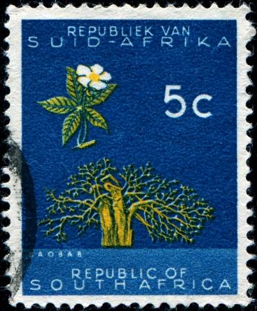 digitata: SOUTH AFRICA - CIRCA 1961  A stamp printed in the South Africa shows Baobab  Adansonia digitata , circa 1961