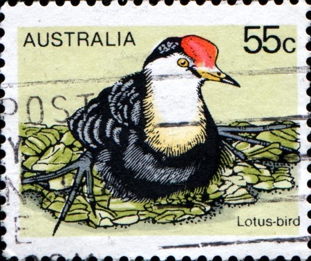 trotters: AUSTRALIA - CIRCA 1978  A stamp printed in Australia shows Lotus bird, Lily Trotters or Jesus Birds - Jacanas, circa 1978  Stock Photo