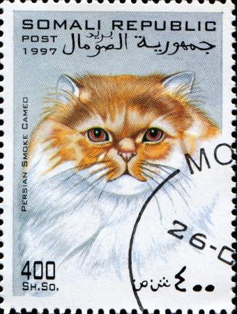 somali: SOMALIA - CIRCA 1997 Un sello impreso en la muestra somal�es gato persa Cameo de humo en torno a 1997 Foto de archivo