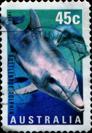postmail: AUSTRALIA - CIRCA 1998  A stamp printed in Australia shows Bottlenose Dolphin - Tursiops aduncus, circa 1998  Stock Photo