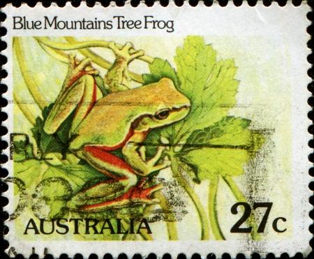 blue mountains tree frog: AUSTRALIA - CIRCA 1982  A stamp printed in Australia, shows the Blue Mountains Tree Frog  Litoria citropa , circa 1982
