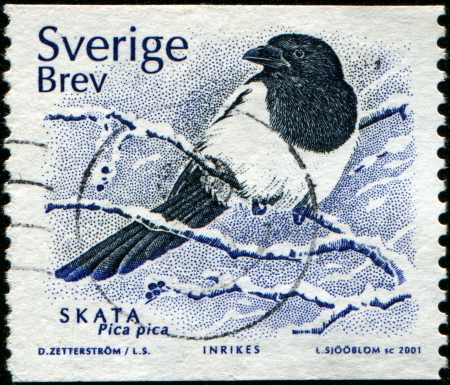 SWEDEN - CIRCA 2001   A stamp printed in Sweden shows Eurasian Magpie - Pica pica, circa 2001  photo