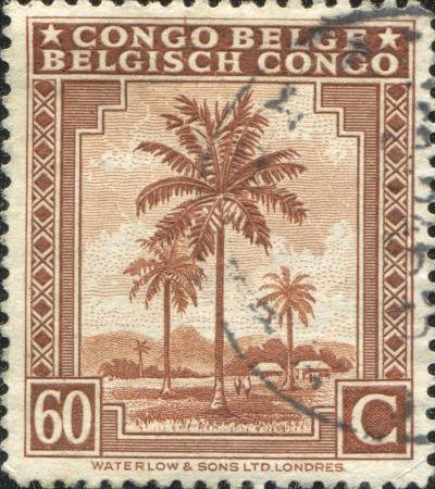 BELGIAN CONGO - CIRCA 1943  A stamp printed in Belgian Congo shows Oil Palms, circa 1943 photo